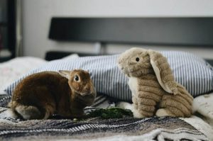 nursery and preschool Animal Club show bunny