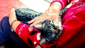 cat for care home animal therapy