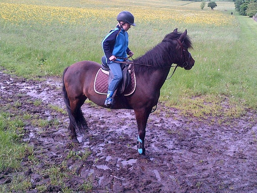 Horses should be ridden regularly