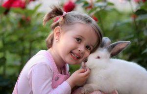 Animal Club fluffy rabbit ecounter