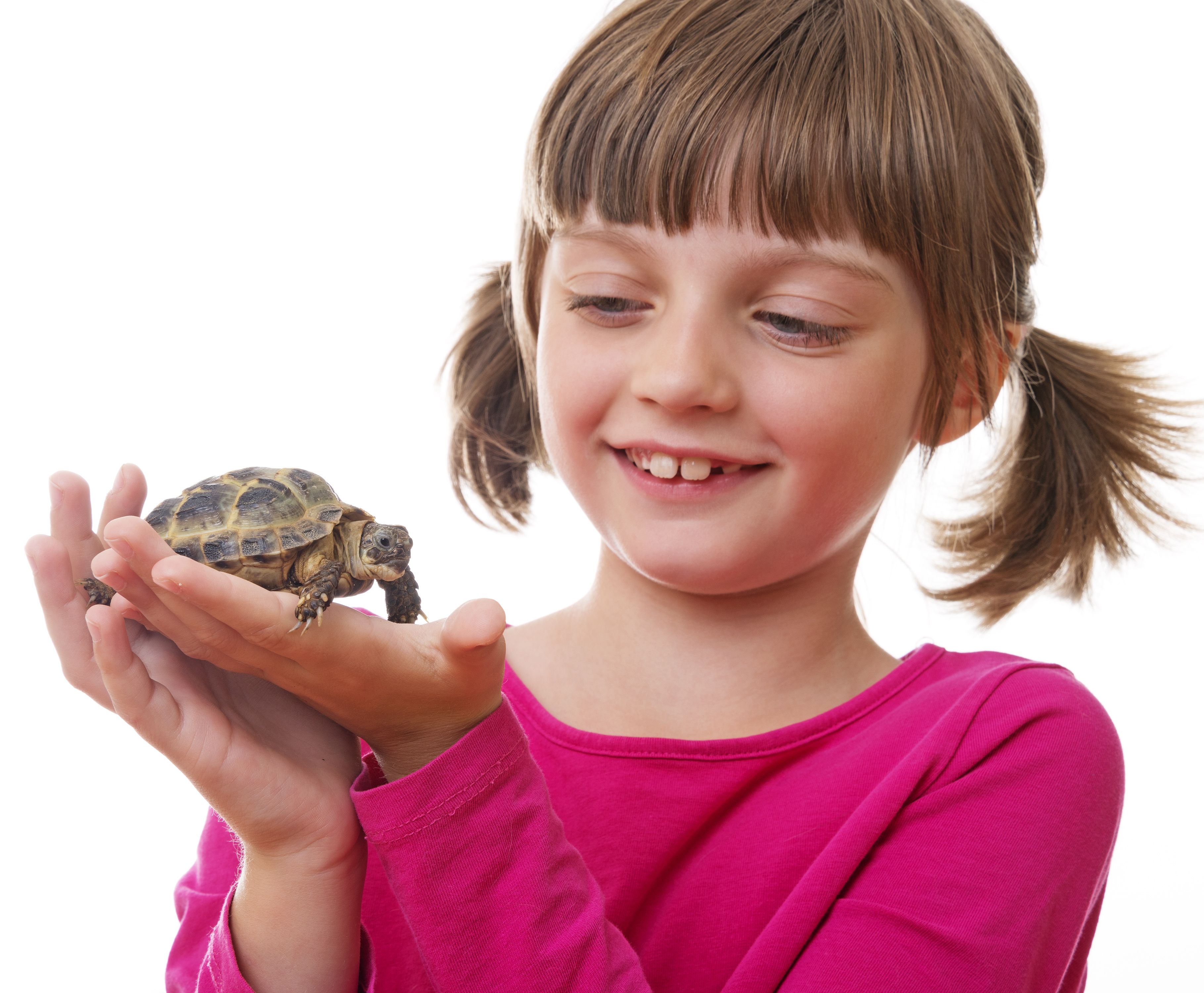 happly little girl holding a pet turtle from Animal school visits Manchester