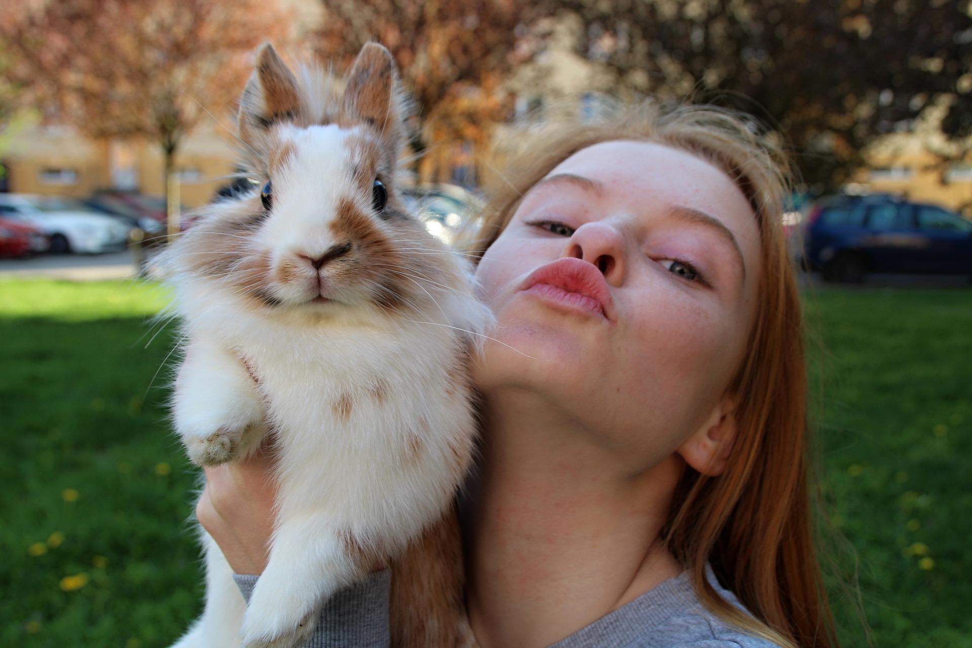 Secondary School Animal Workshop Rabbit