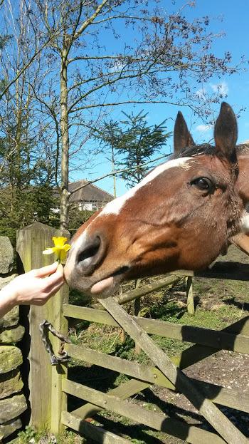 Horses love human company!