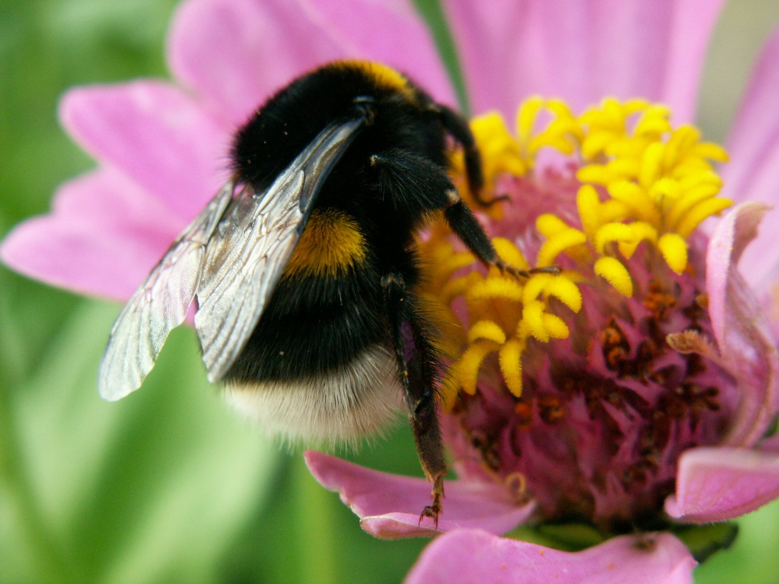 bees pollinate different plants