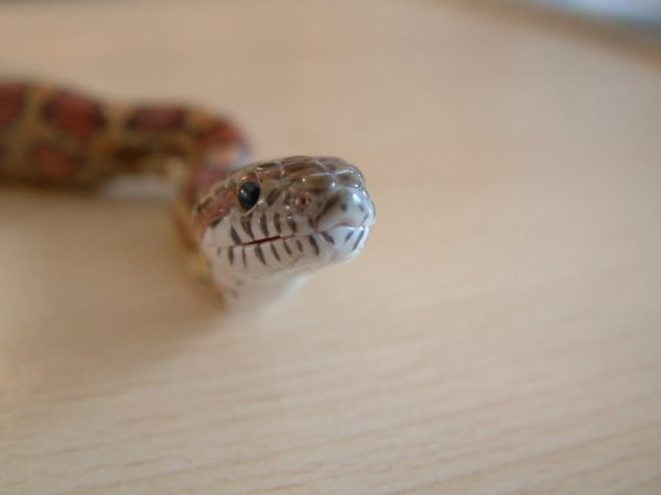 snakes make great pets