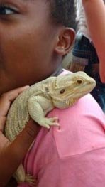 girl with a bearded dragon at an animal party