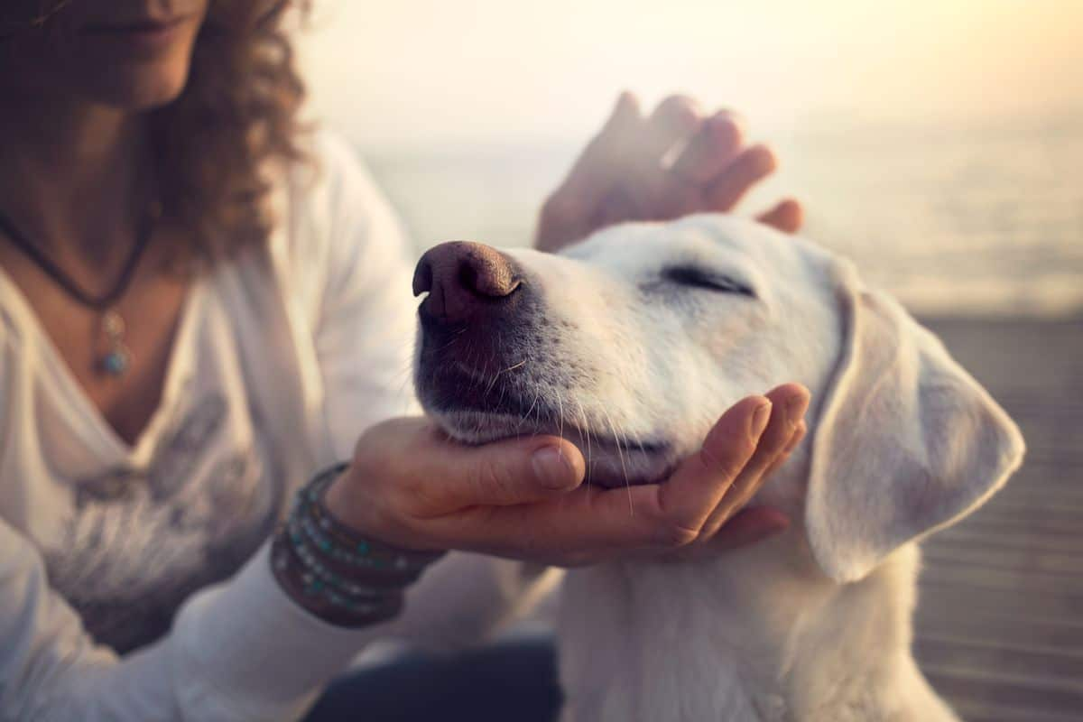 How Animal Therapy is Supporting the Healthcare Industry