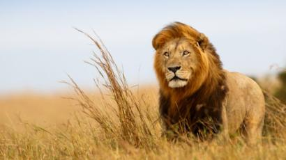 Will a Ban on Trophy Hunting Help