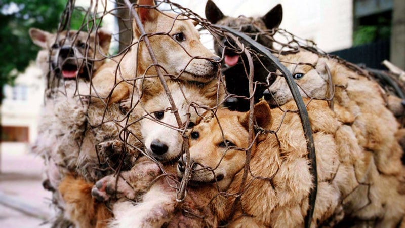 How To Stop Animal Abuse And Cruelty
