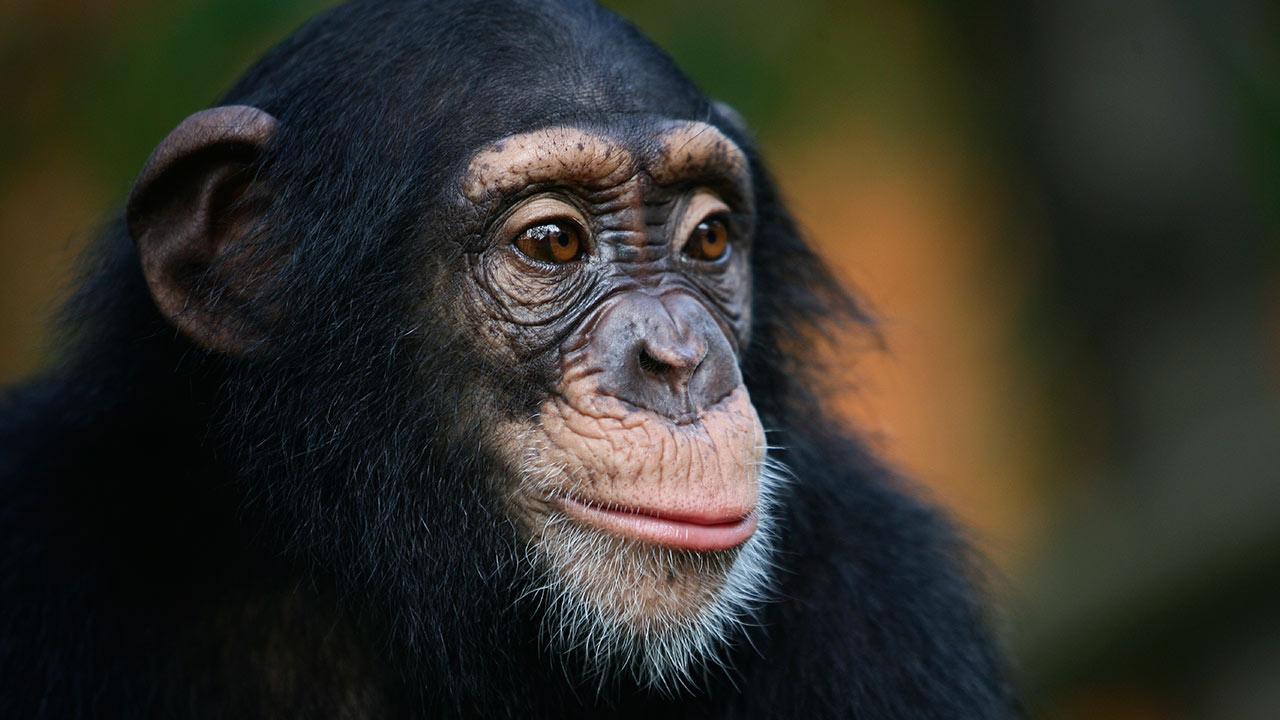 Intelligent animals
