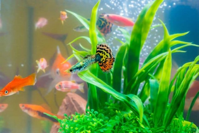 Importance of aquarium