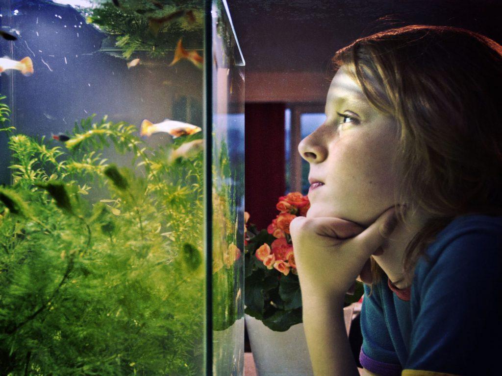 Importance of aquarium