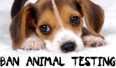 Why Should We Stop Animal Testing