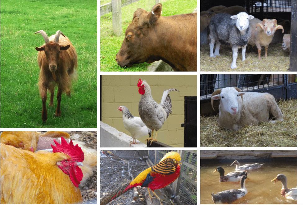 Freightliners City Farm Animal Club Islington