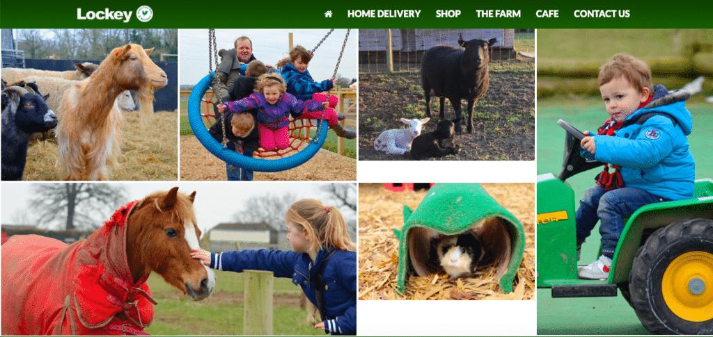 Lockey Farm Animal Club Reading