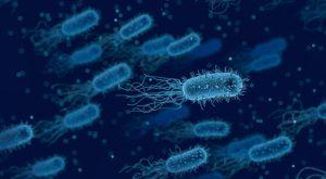Diverse Micro-organisms