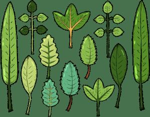 diverse plants
